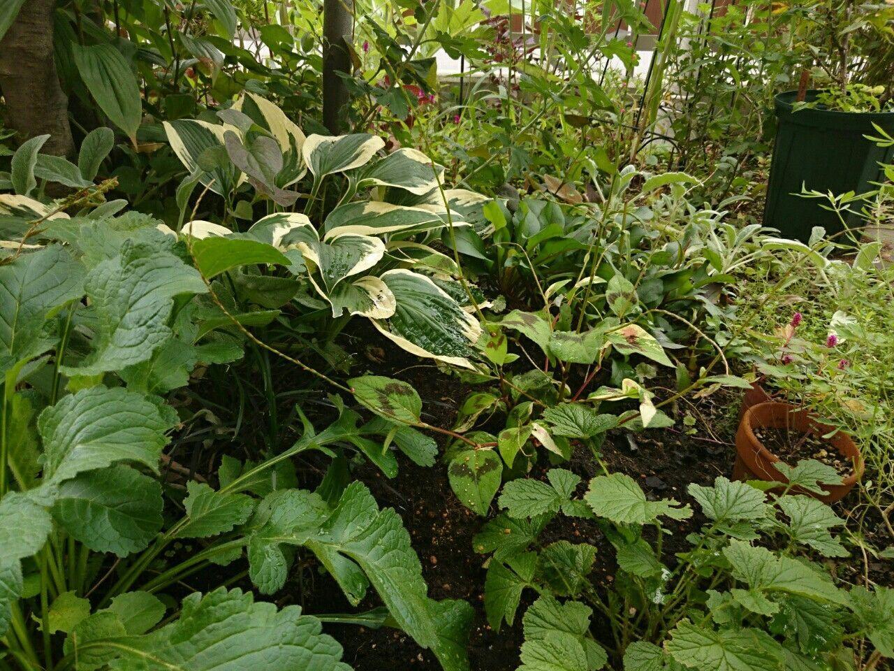 f:id:y-garden:20170904145808j:image