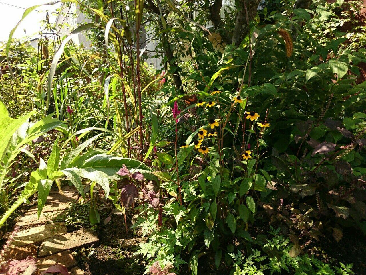f:id:y-garden:20170911065854j:image
