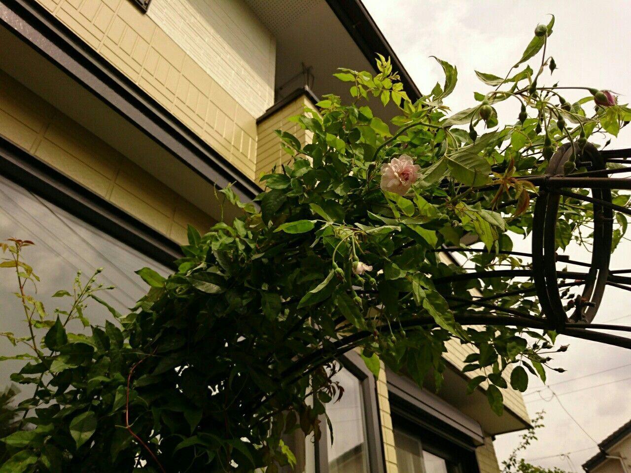 f:id:y-garden:20170930123216j:image