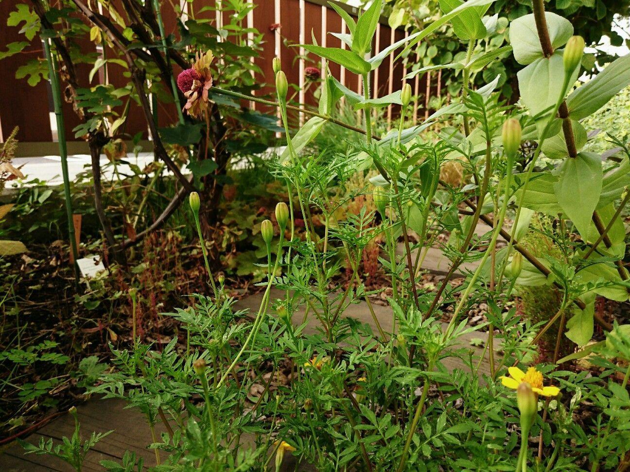 f:id:y-garden:20170930143543j:image
