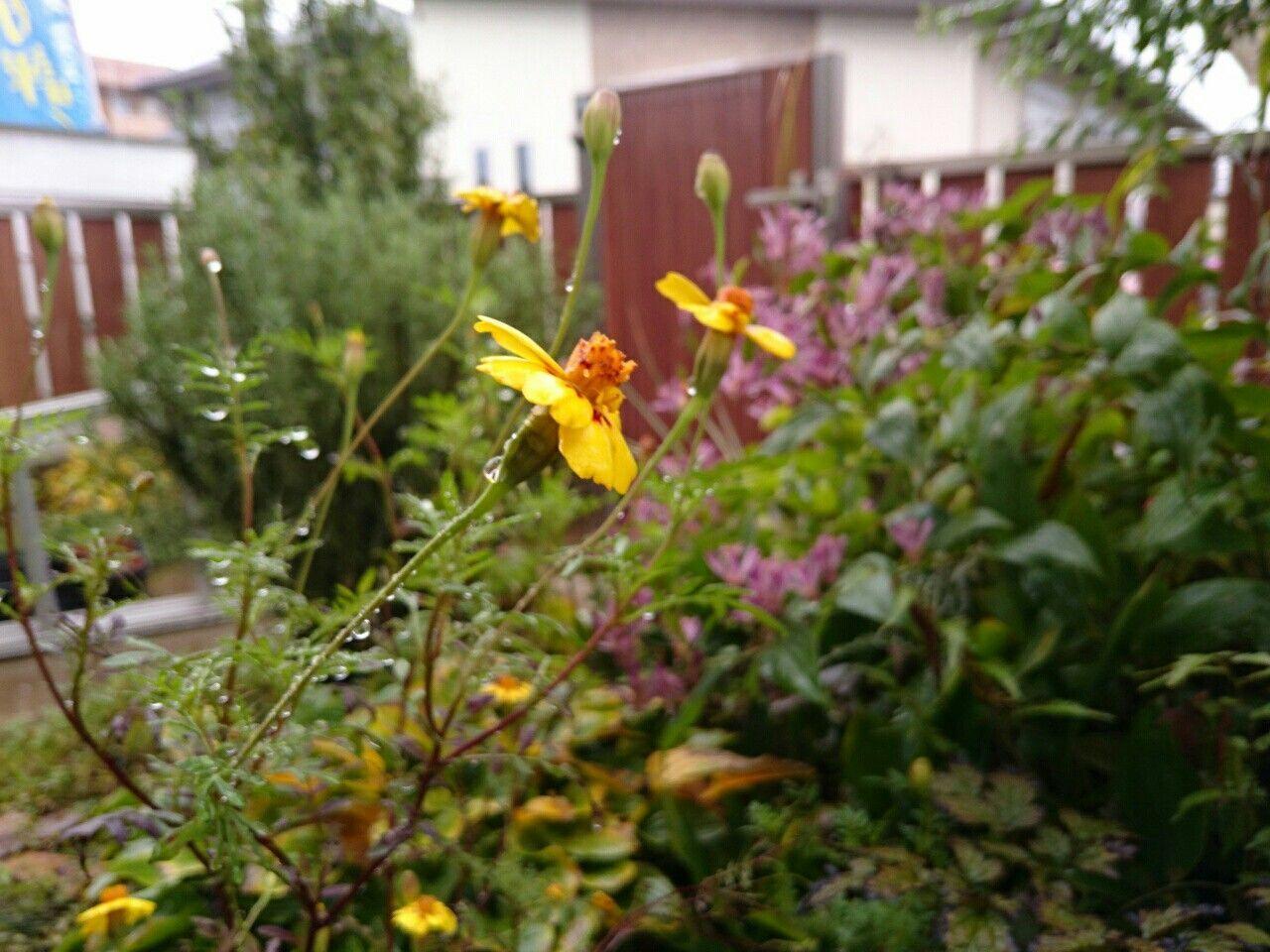 f:id:y-garden:20171021072046j:image