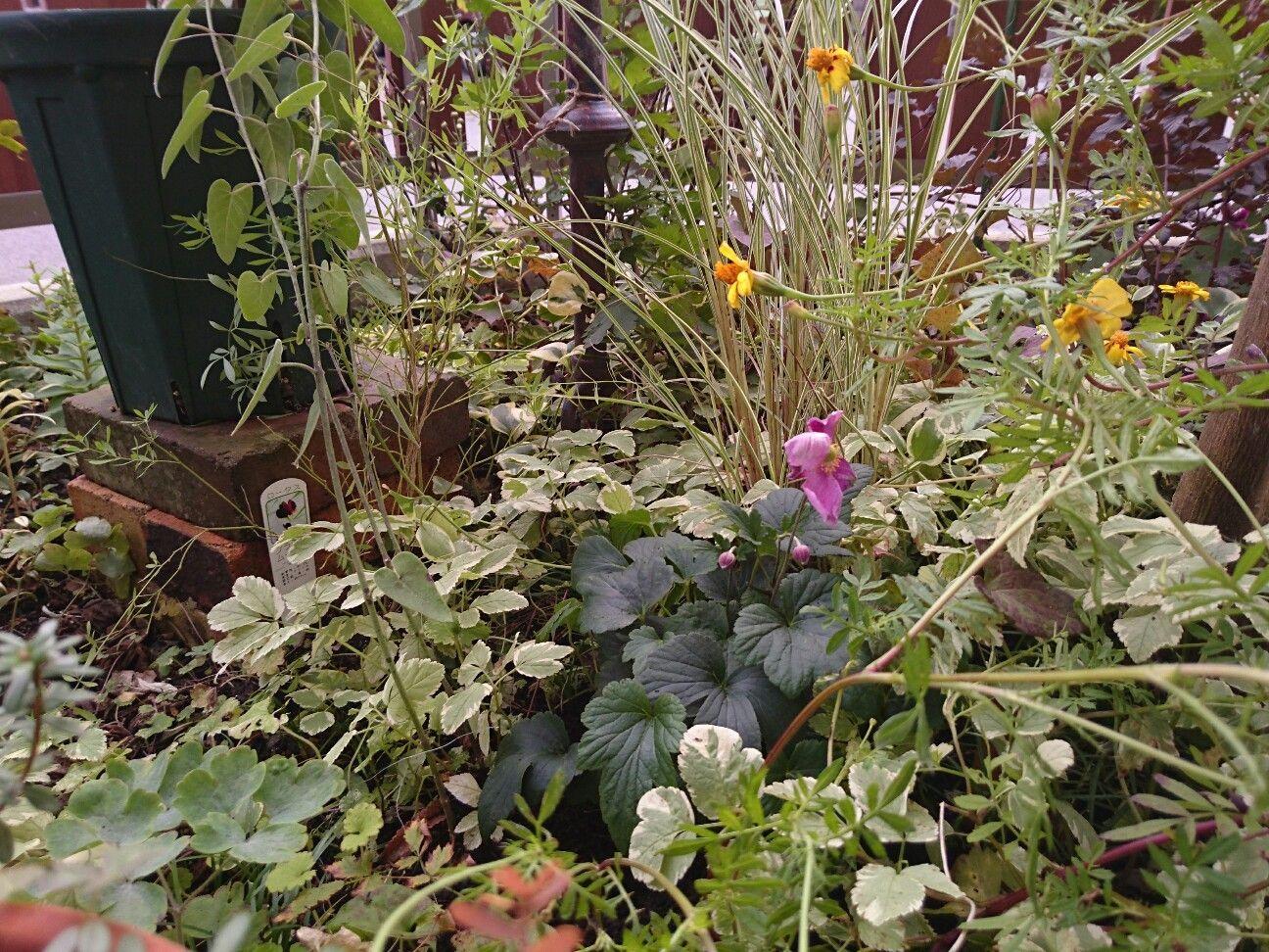 f:id:y-garden:20171024065459j:image