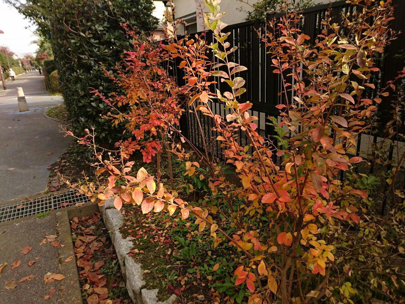 f:id:y-garden:20171104095919j:image