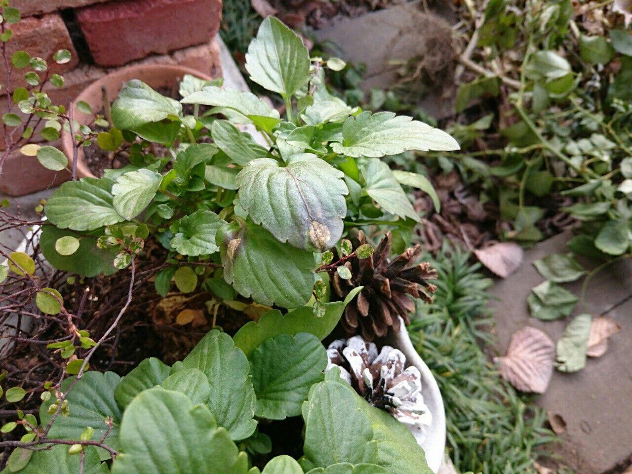 f:id:y-garden:20171122070752j:image