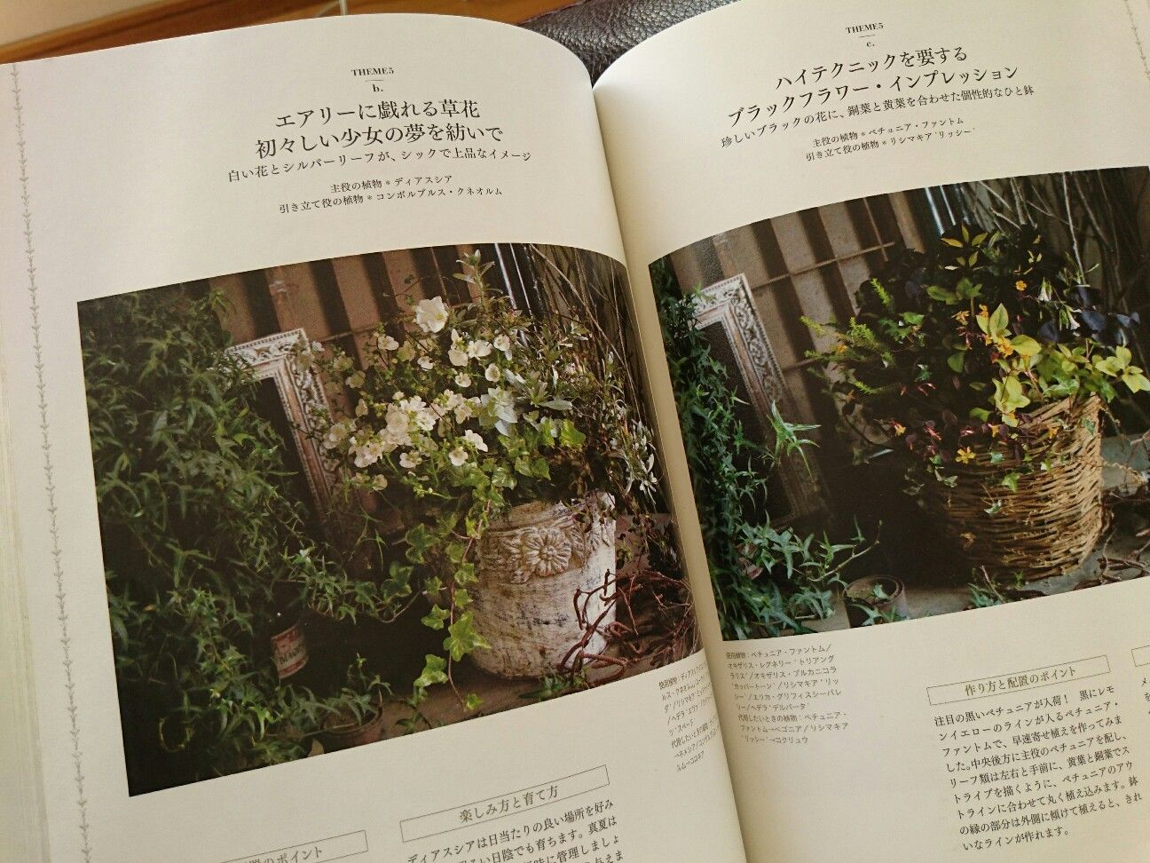 f:id:y-garden:20180110140052j:image