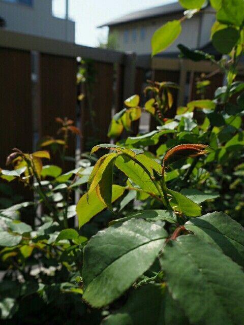 f:id:y-garden:20180413140205j:image
