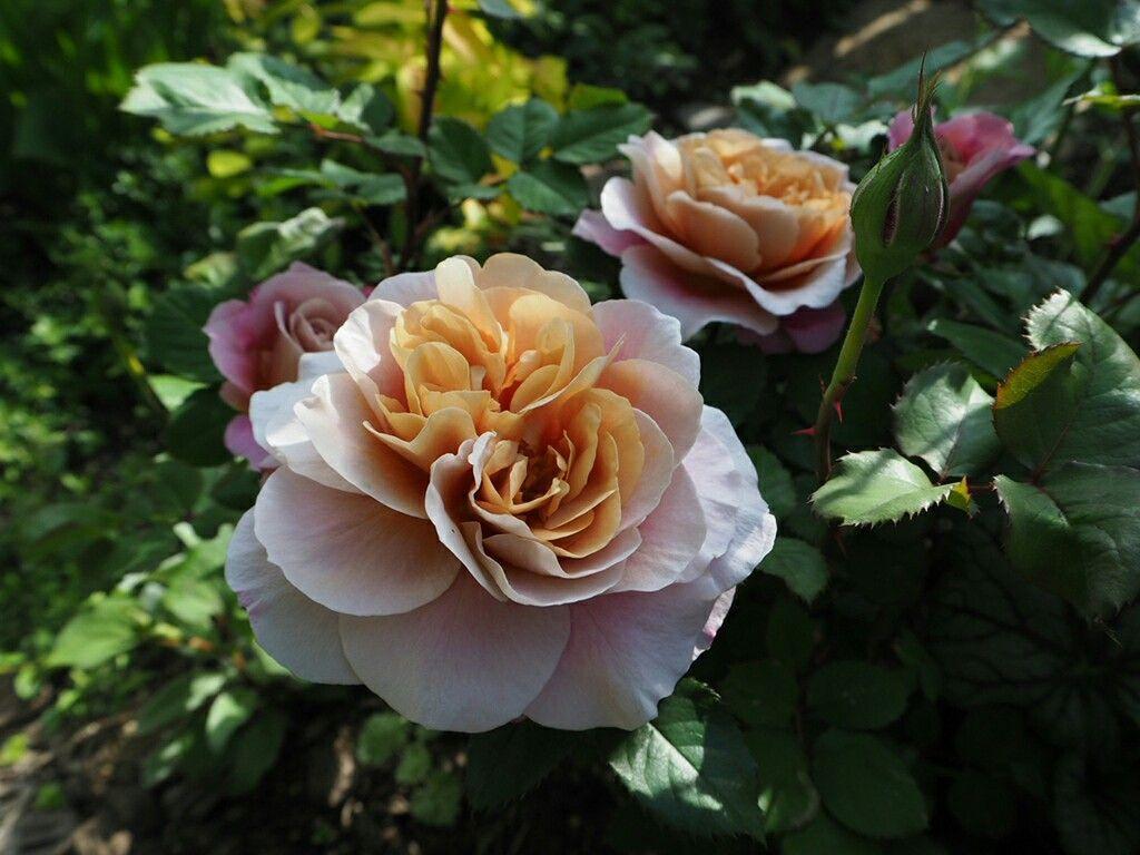 f:id:y-garden:20180430083246j:image