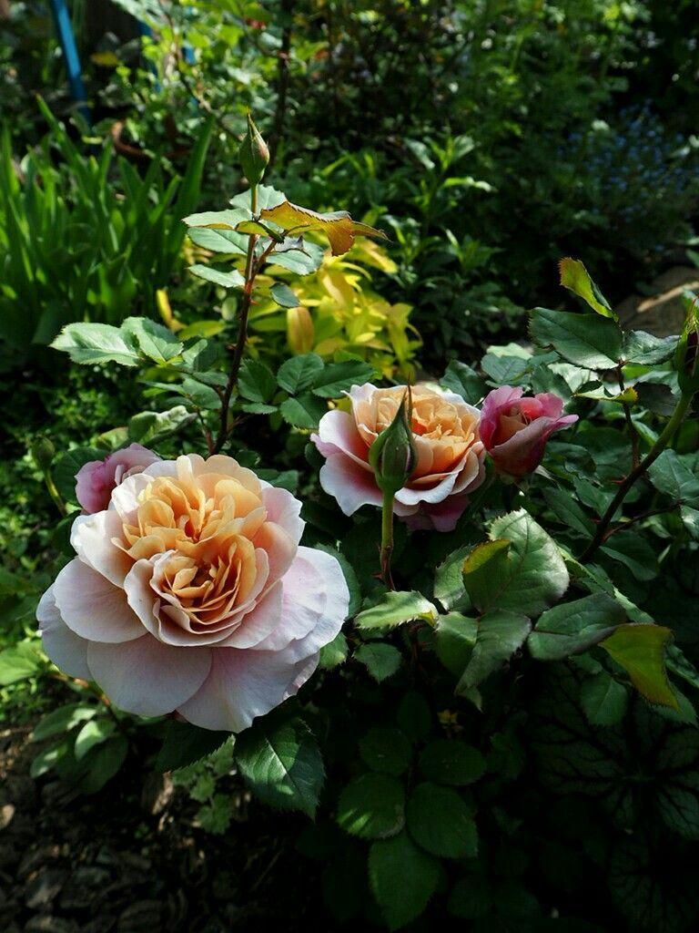 f:id:y-garden:20180430084319j:image