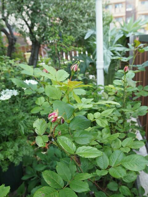 f:id:y-garden:20190512102717j:image
