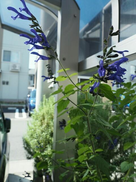 f:id:y-garden:20190925093944j:image