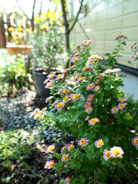 f:id:y-garden:20191028154929j:image