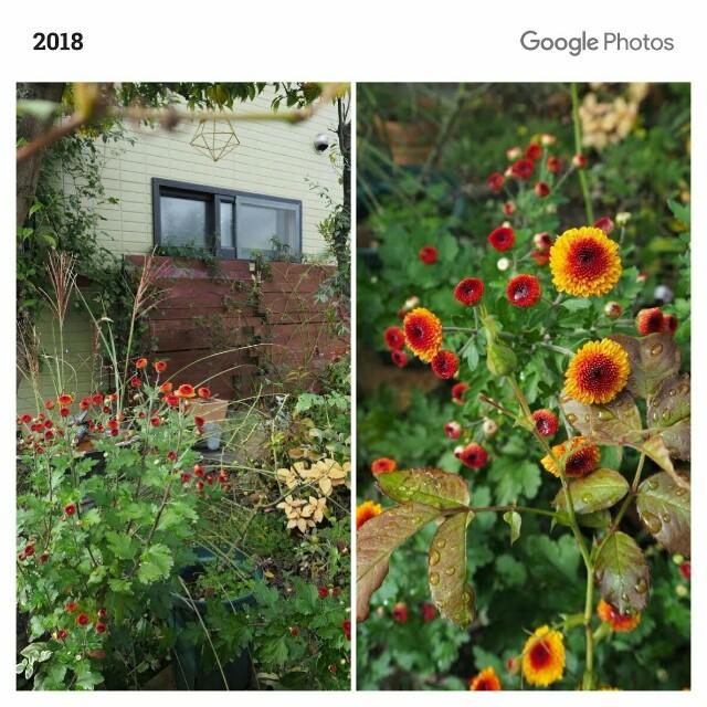 f:id:y-garden:20191028200825j:image