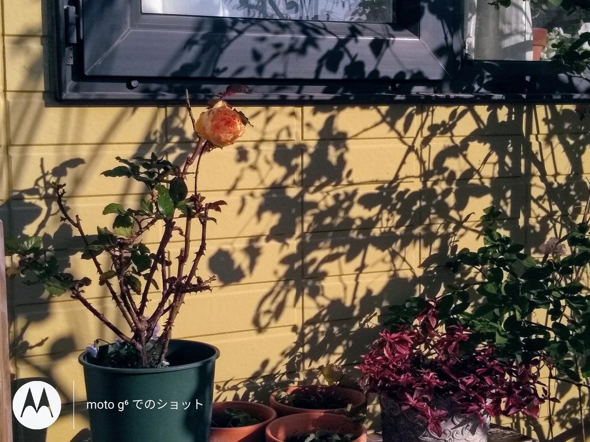 f:id:y-garden:20191216125231j:plain