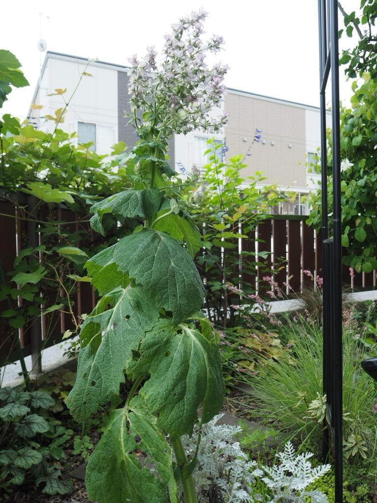 f:id:y-garden:20200618070829j:plain
