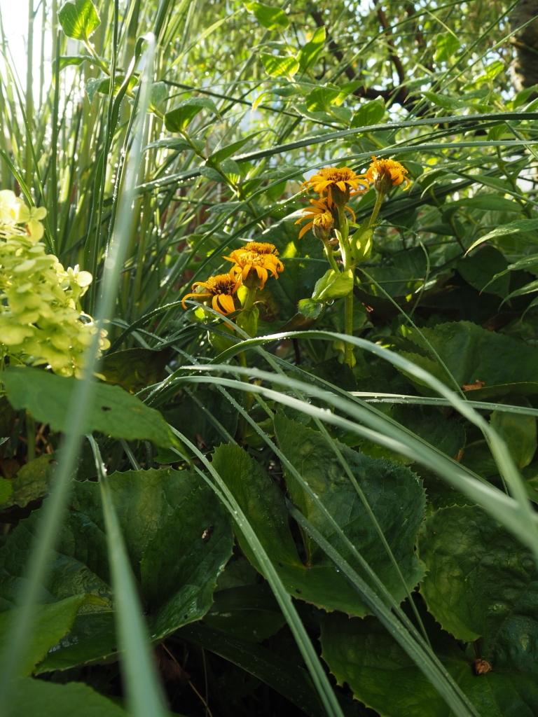 f:id:y-garden:20200831061947j:plain