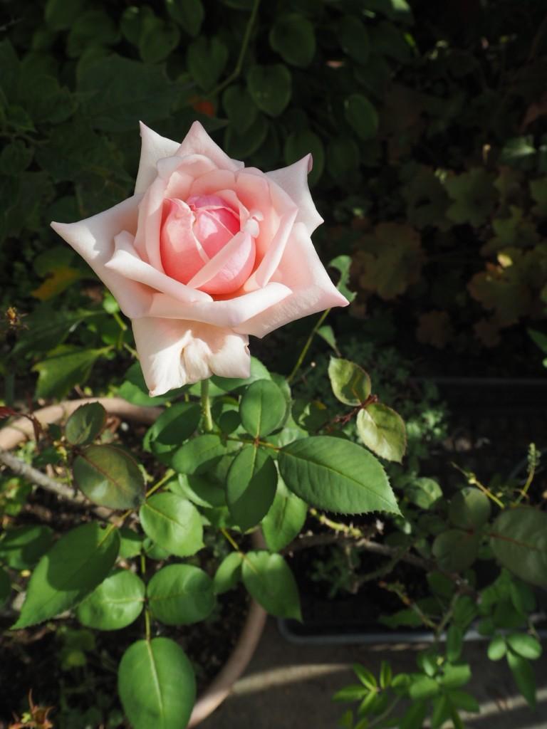 f:id:y-garden:20200911101135j:plain