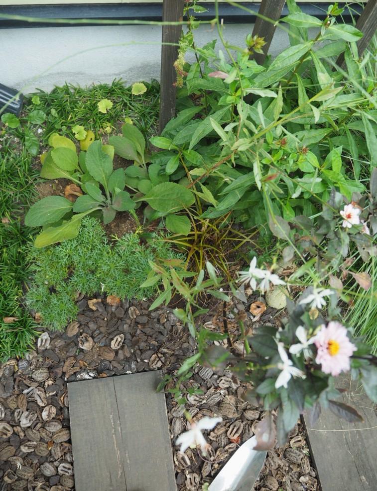 f:id:y-garden:20200924105904j:plain