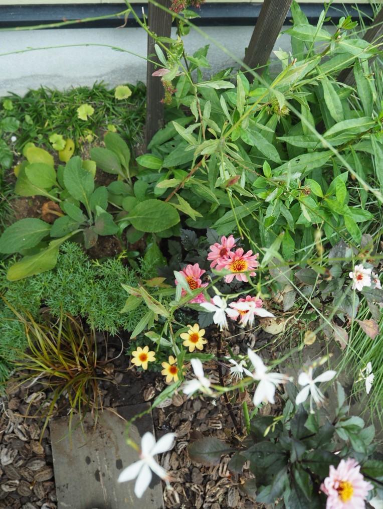f:id:y-garden:20200924123643j:plain