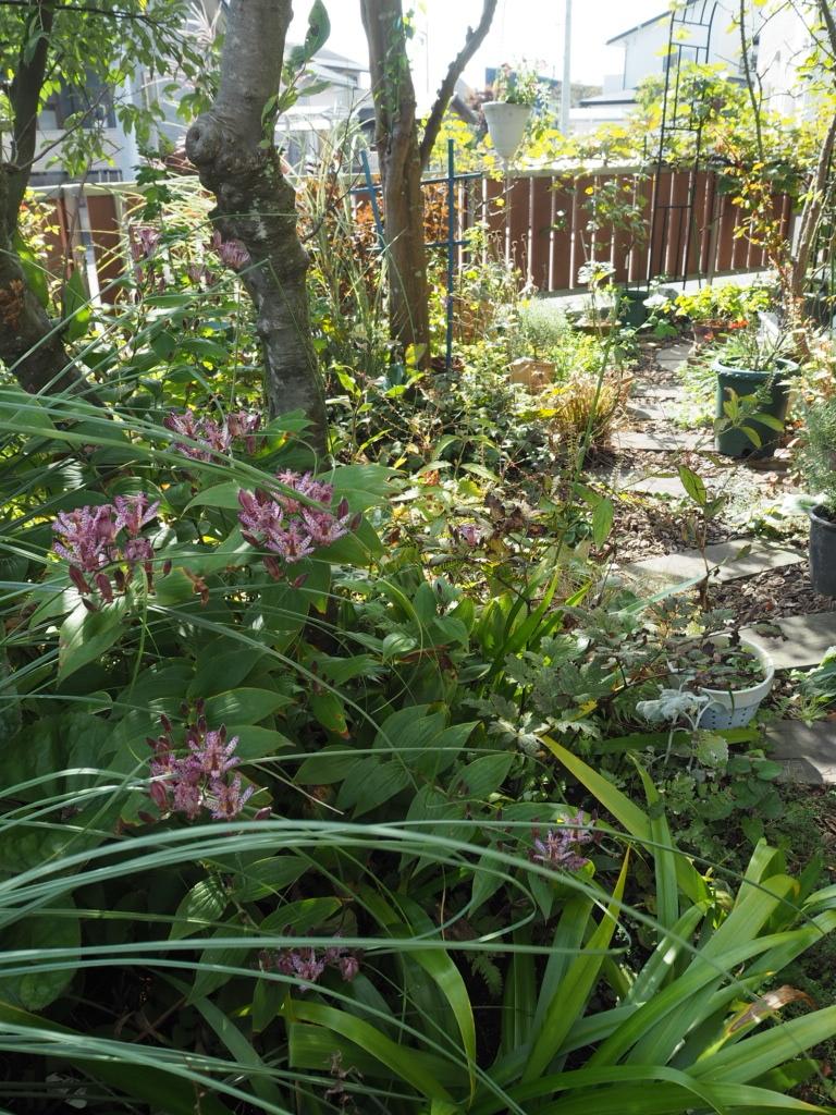 f:id:y-garden:20201020102556j:plain