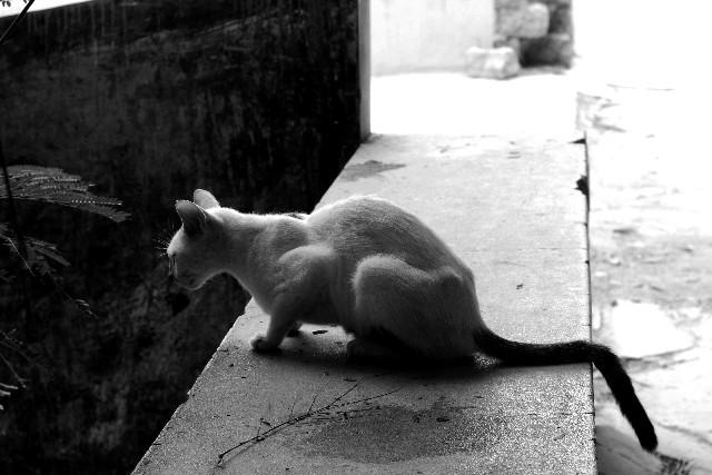 何かを見下ろす猫のモノクロ写真