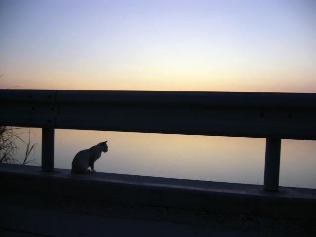 夜明け前に遠くを見つめる猫の写真