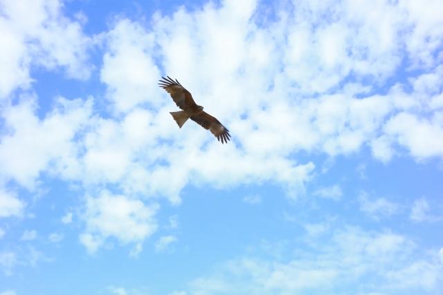 空を飛ぶワシの写真
