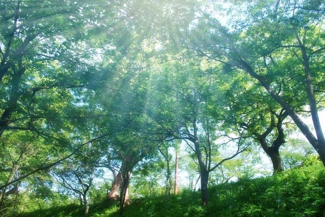 森の中に降り注ぐ光の写真
