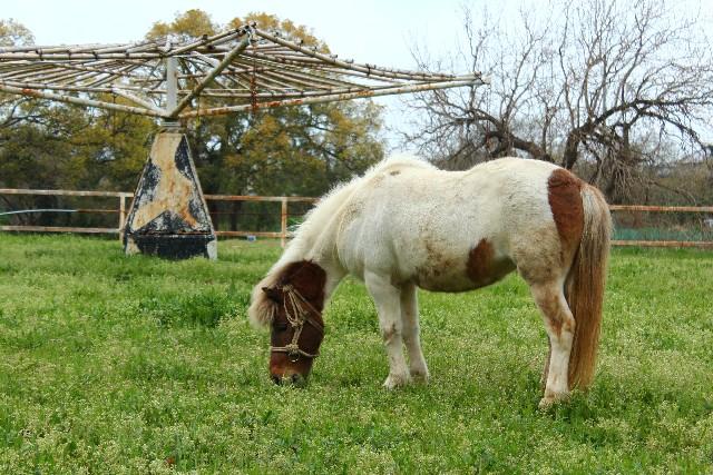 草原で草を食む馬の写真