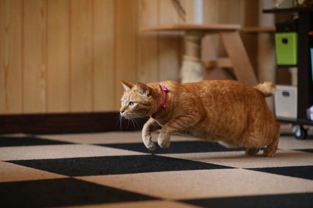 何かに飛びつこうとしている猫の写真