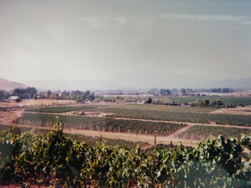 カリフォルニア州ナパバレーのぶどう畑で撮影した写真