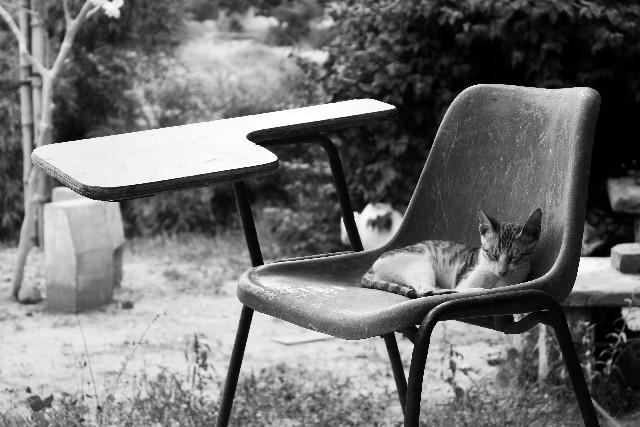 ボロい椅子の上で眠る猫のモノクロ写真