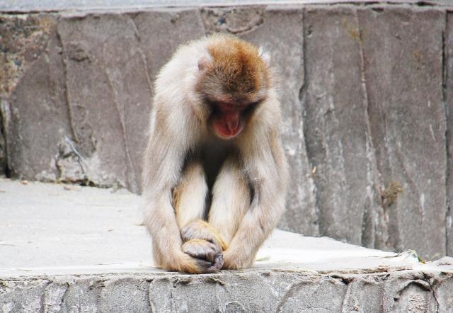 落ち込んでいる猿の写真