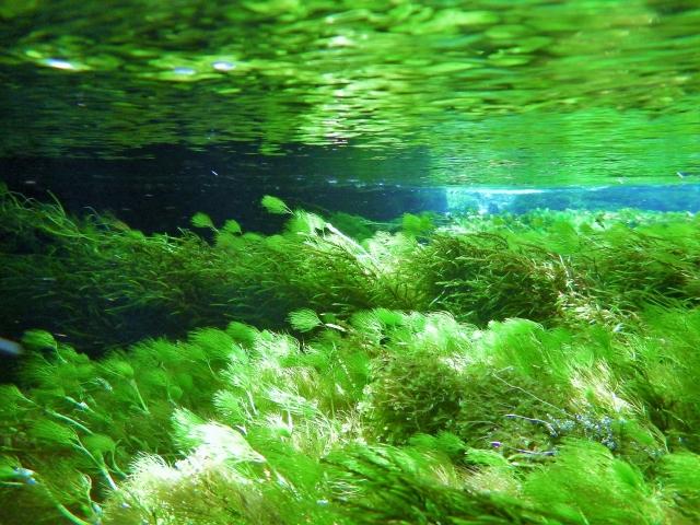綺麗な川の水中写真
