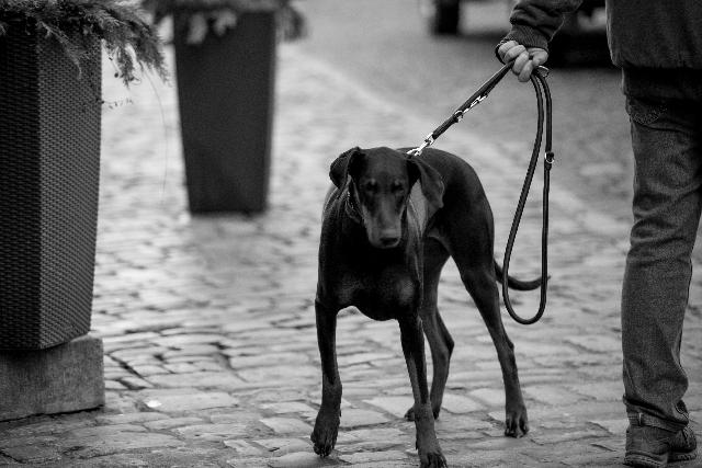 黒い犬の写真