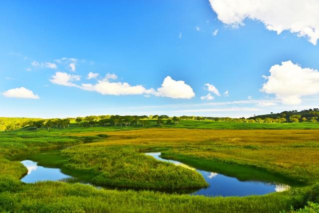 北海道の湿原の写真