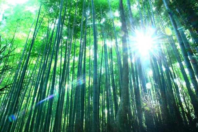 竹林に降りそそく光の写真