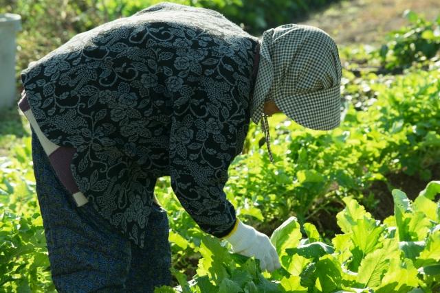 農作業を農作業をしているおばあさんの写真