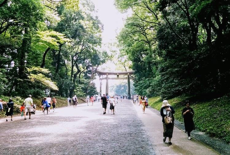 明治神宮の参道の写真