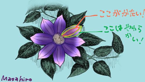 f:id:y_Masahiro:20190630181916p:plain