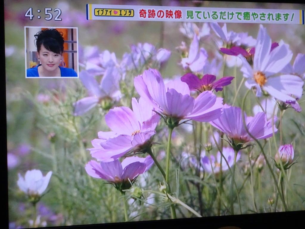 f:id:y_hamada:20160914210131j:plain
