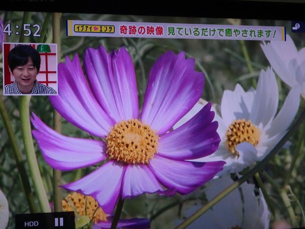 f:id:y_hamada:20160914210144j:plain