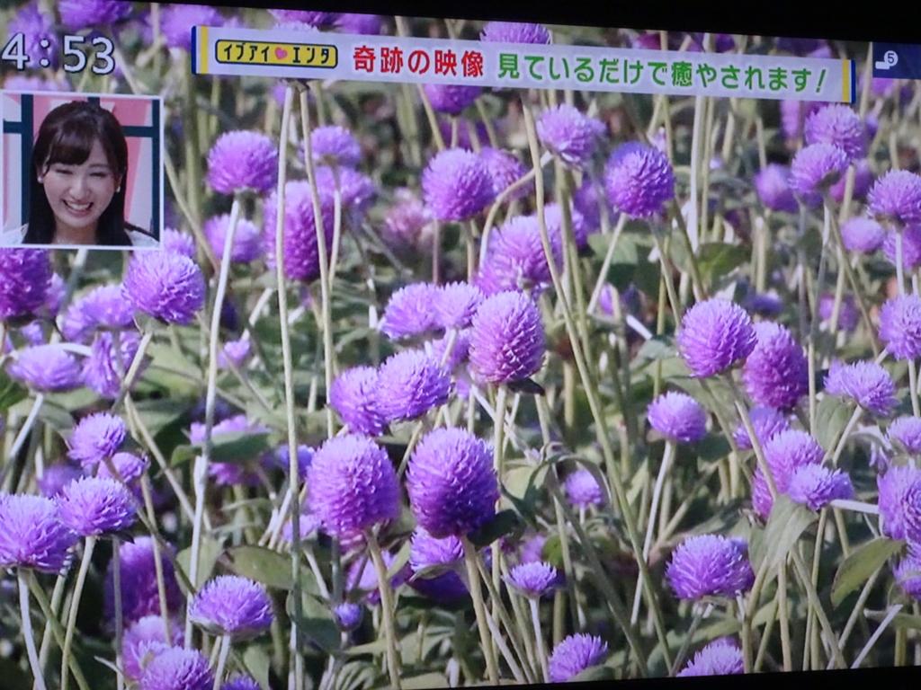 f:id:y_hamada:20160914210817j:plain