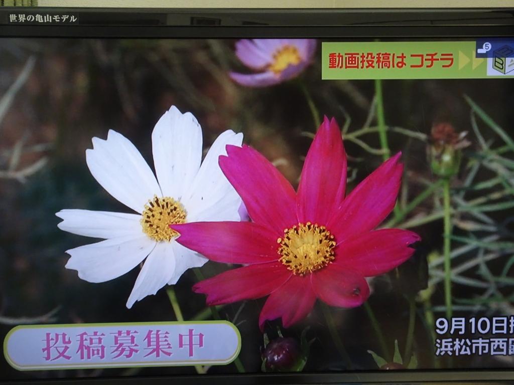 f:id:y_hamada:20170918162040j:plain