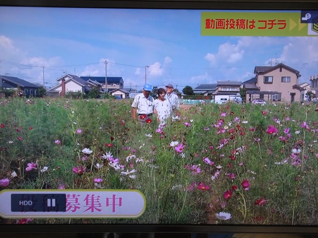f:id:y_hamada:20170918162220j:plain