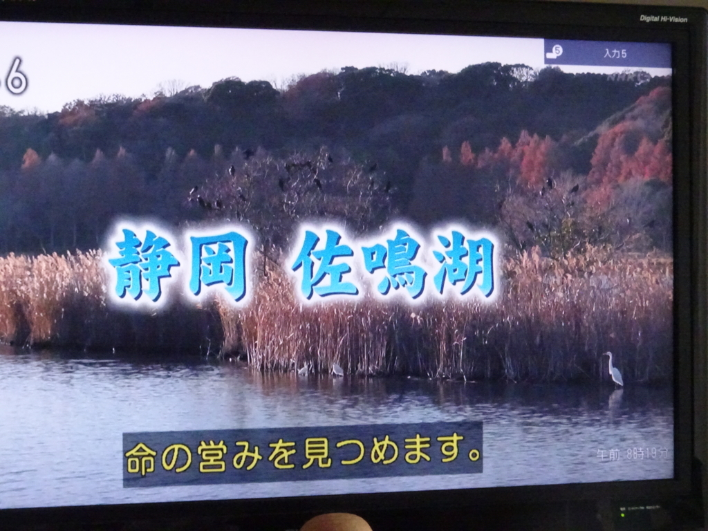 f:id:y_hamada:20180225082403j:plain