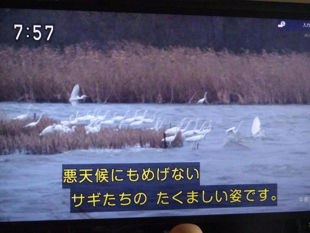 f:id:y_hamada:20180225083518j:plain