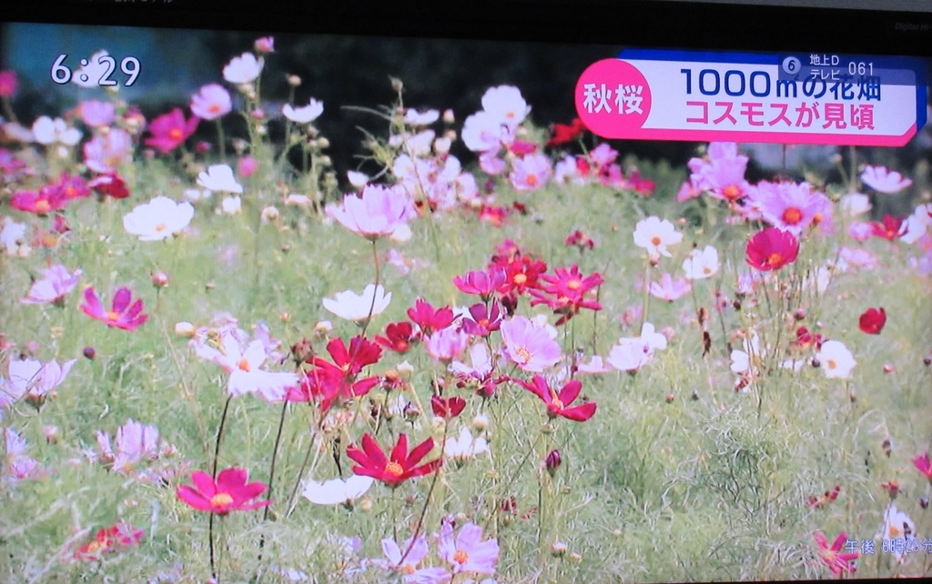 f:id:y_hamada:20180912182816j:plain