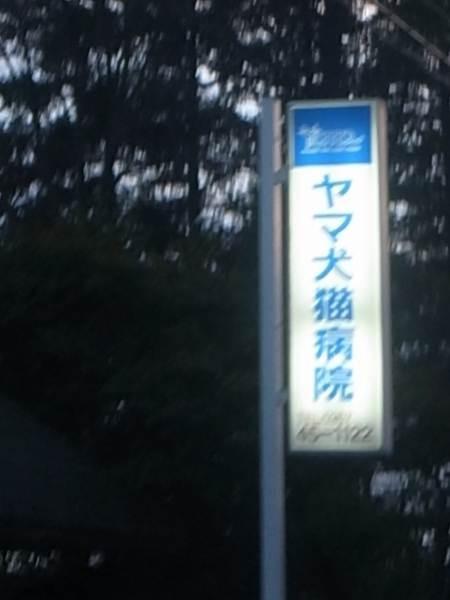 口コミ・評判 5件: ヤマ犬猫病院 - 長野県北佐久郡軽 …