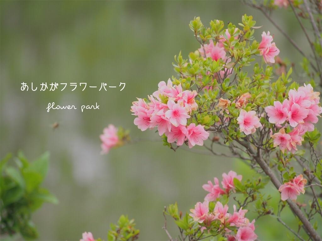 f:id:ya_mai_8:20190531191114j:image