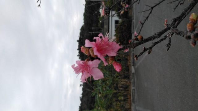 f:id:yaaninju-yui35:20200119081024j:image